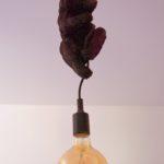 Lampe ourson